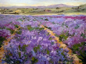 Fields of Lavendar